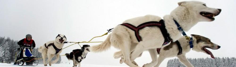 Lead-Dog Sales